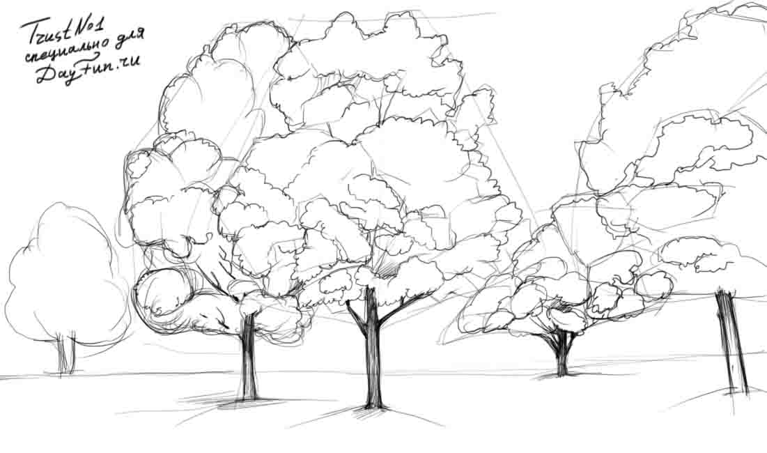 how to draw a redwood tree step by step